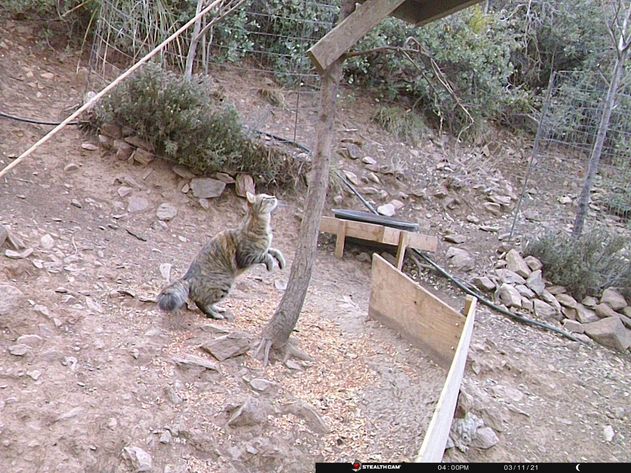 Under the feeder