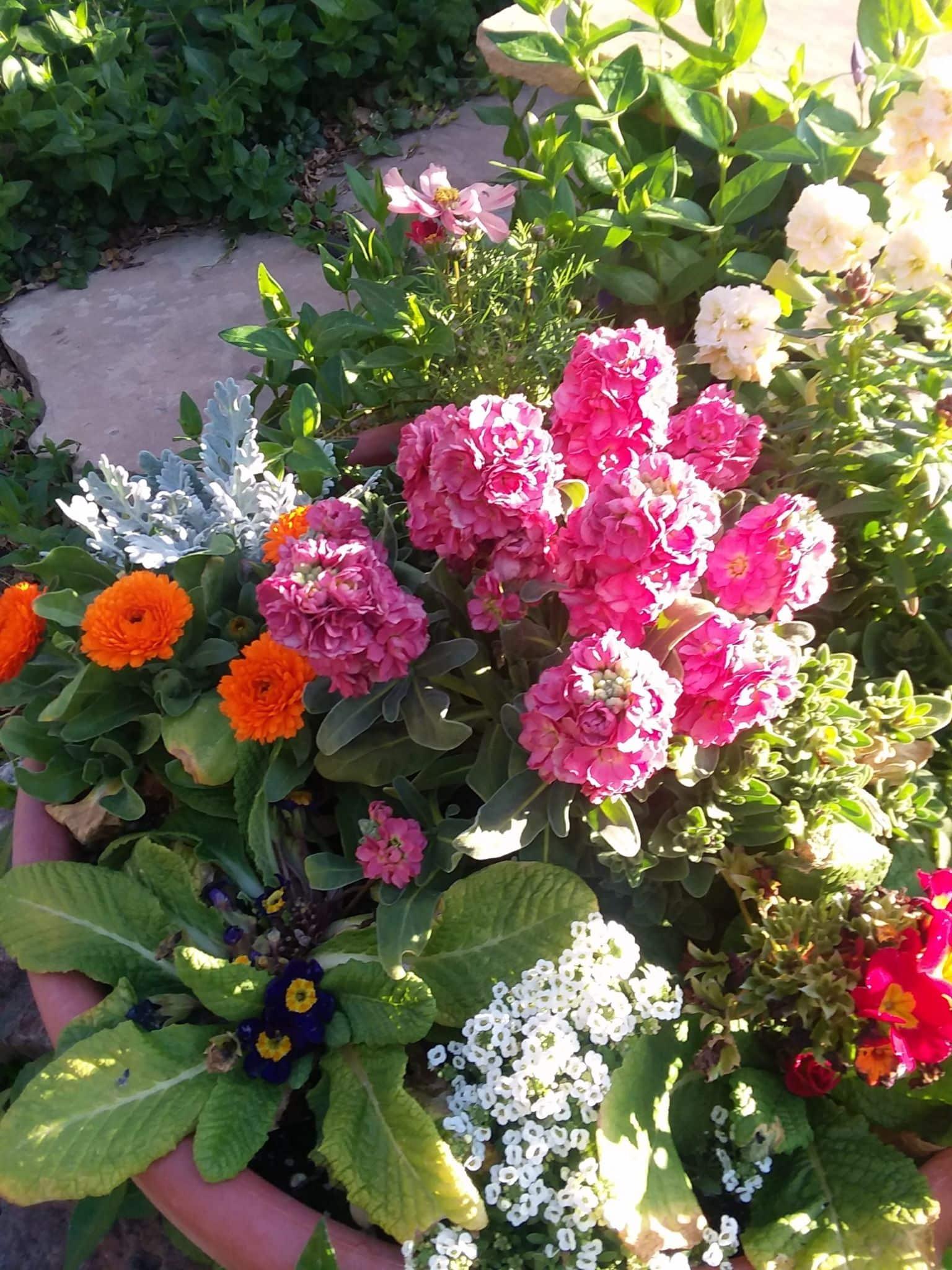 Pot of fleurs