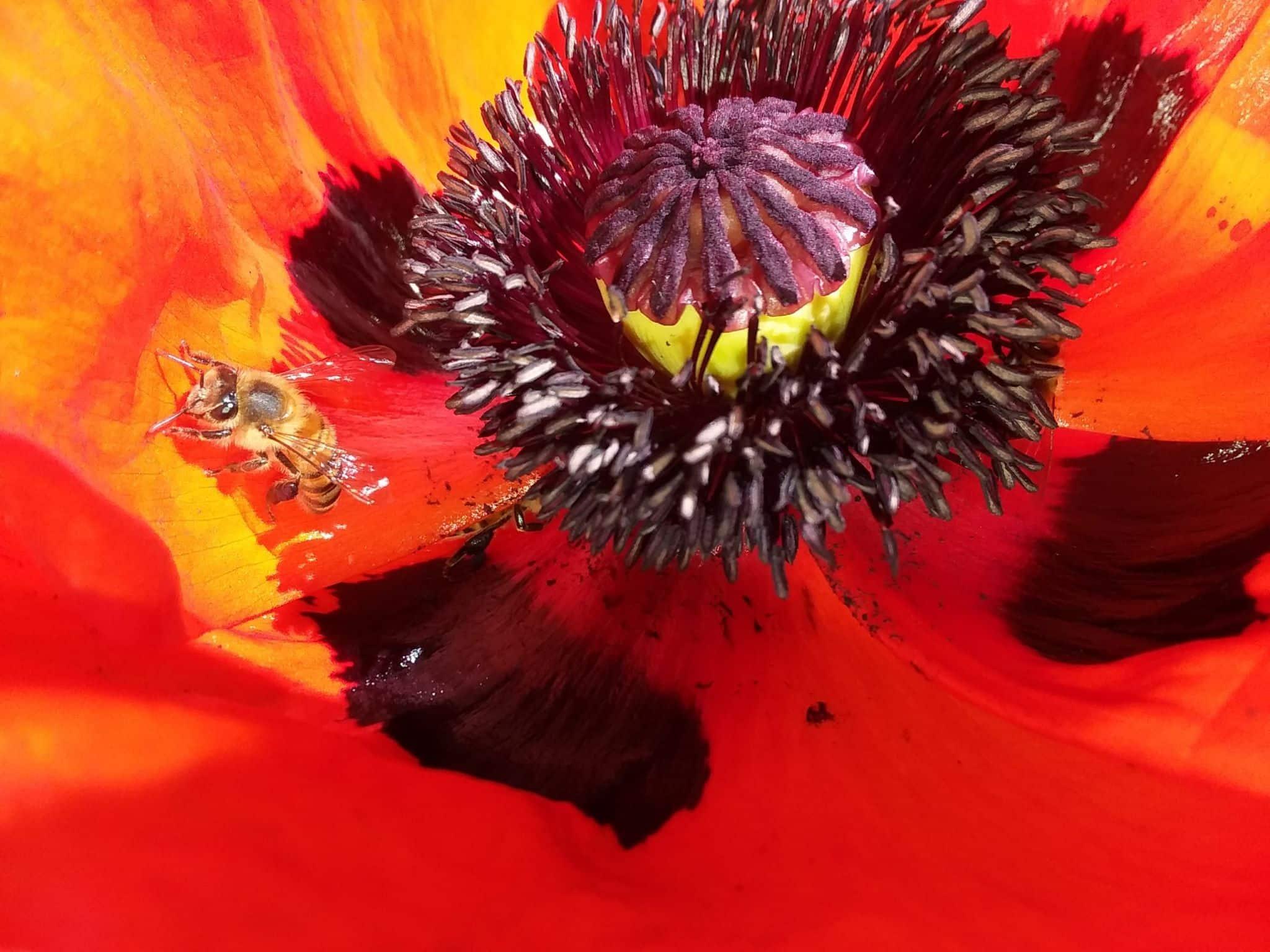 Purple pollen eaters