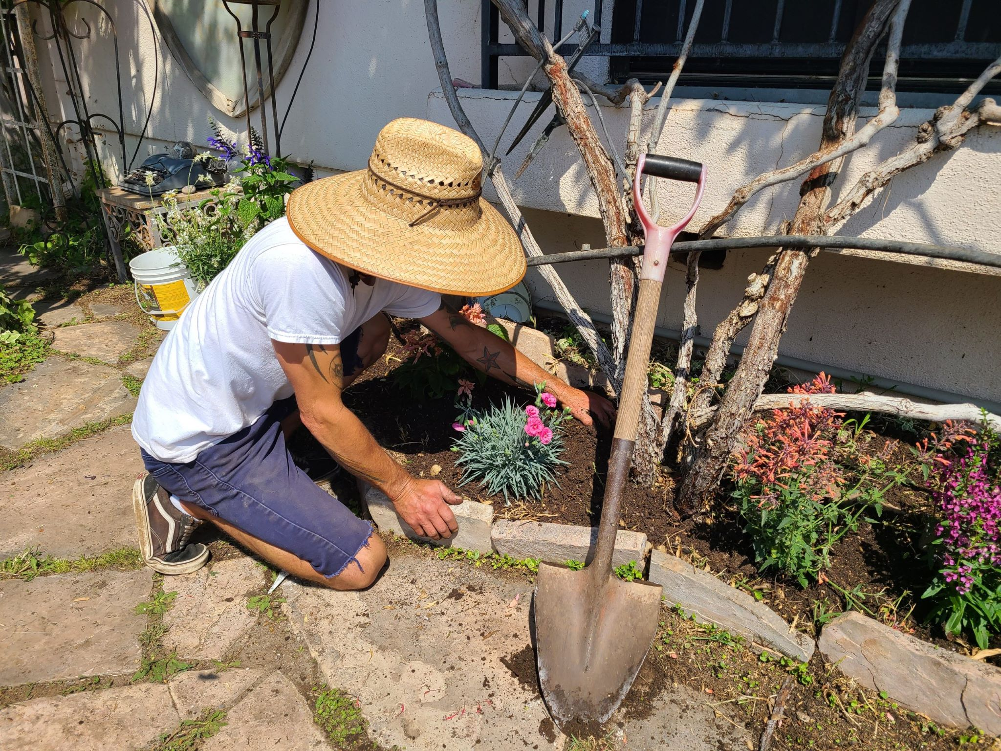 Preliminary planting