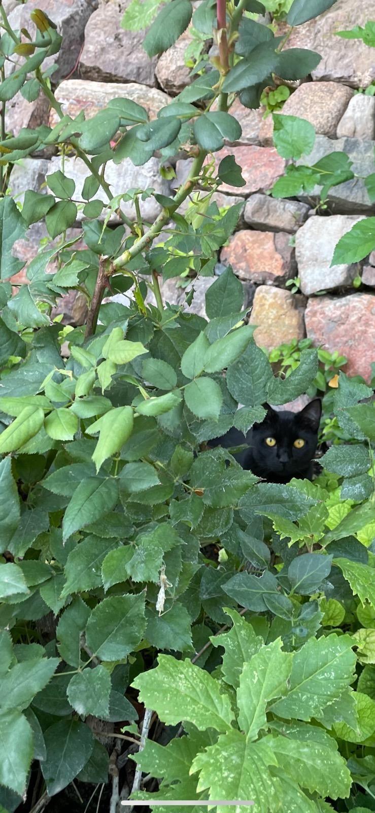 Little kitty visitor