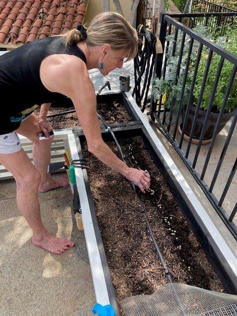 Third planting - snow peas