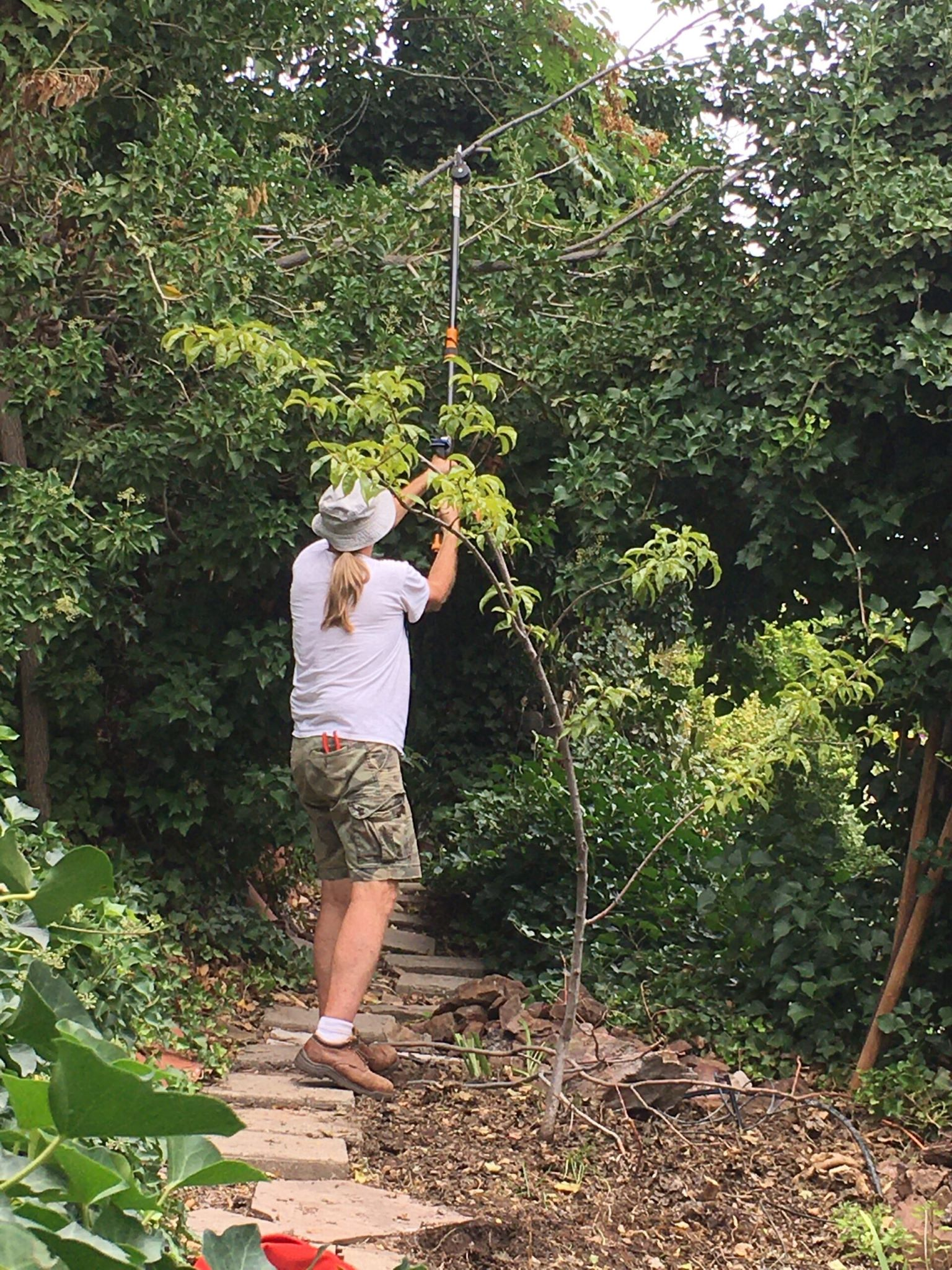 Trimming more ivy